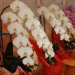 開園祝い花